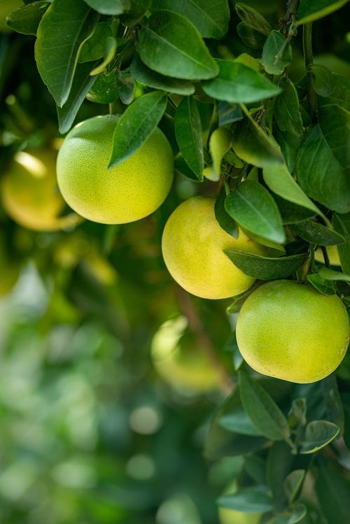 Äpfel eignen sich für eine gesunde Ernährung, denn sie enthalten viele Vitamine, Mineralstoffe und Spurenelemente. Außerdem enthalten sie Antioxidantien, die die Zellen vor freien Radikalen schützen. Der Apfel ist in Deutschland das beliebteste Obst: Im Durchschnitt isst jeder 30 Kilogramm oder etwa 125 Äpfel pro Jahr.