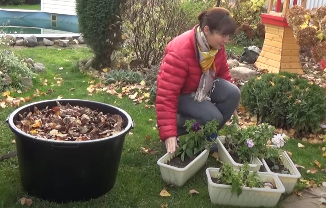 Gartenlandschaftsbetriebe haben im Herbst vor dem Wintereinbruch viel zu tun