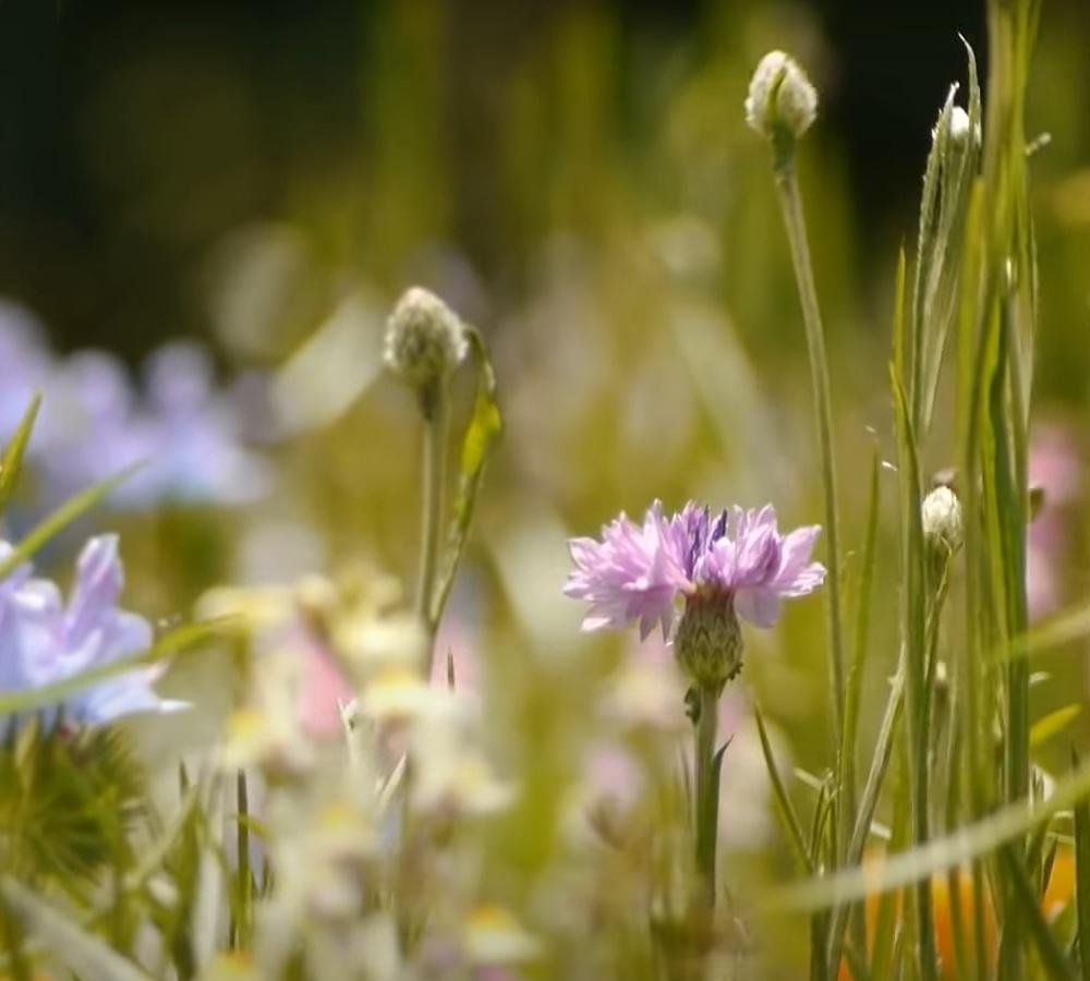Grundsätzlich gilt Erfahrung macht den Meister wer Arznei- und Gewürzpflanzen anbaut braucht auch einige Spezialkenntnisse in Anbauverfahren der einzelnen Arten.
