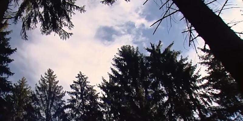 Blick aus dem Wald zum blauen Himmel