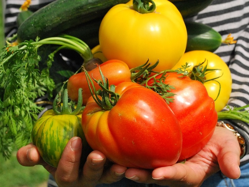 Frischgemüse wie Blatt- und Fruchtgemüse, Salate, Kräuter, Wurzel- und Knollengemüse oder auch Spargel und Pilze werden von Gemüsegärtnern und -gärtnerinnen erzeugt, vermehrt und kultiviert. Die richtige Sortenwahl und eine genaue Anbauplanung sind wichtige Voraussetzungen für eine erfolgreiche Gemüsekultur.