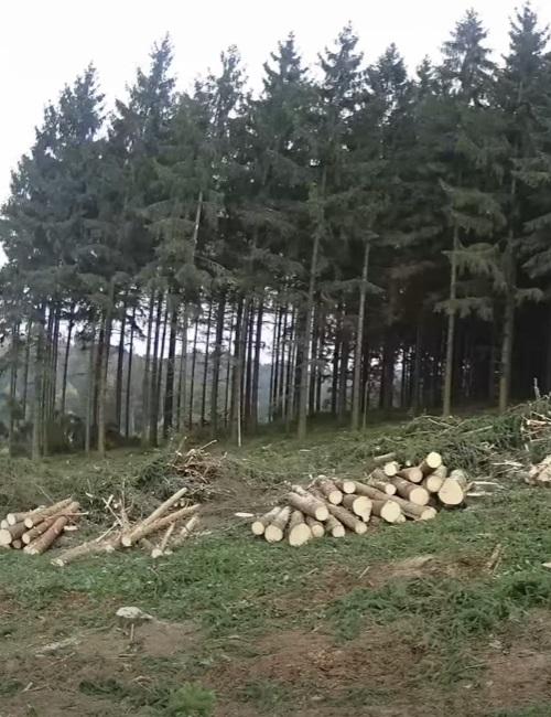 Forstbetrieb bei der Baumernte