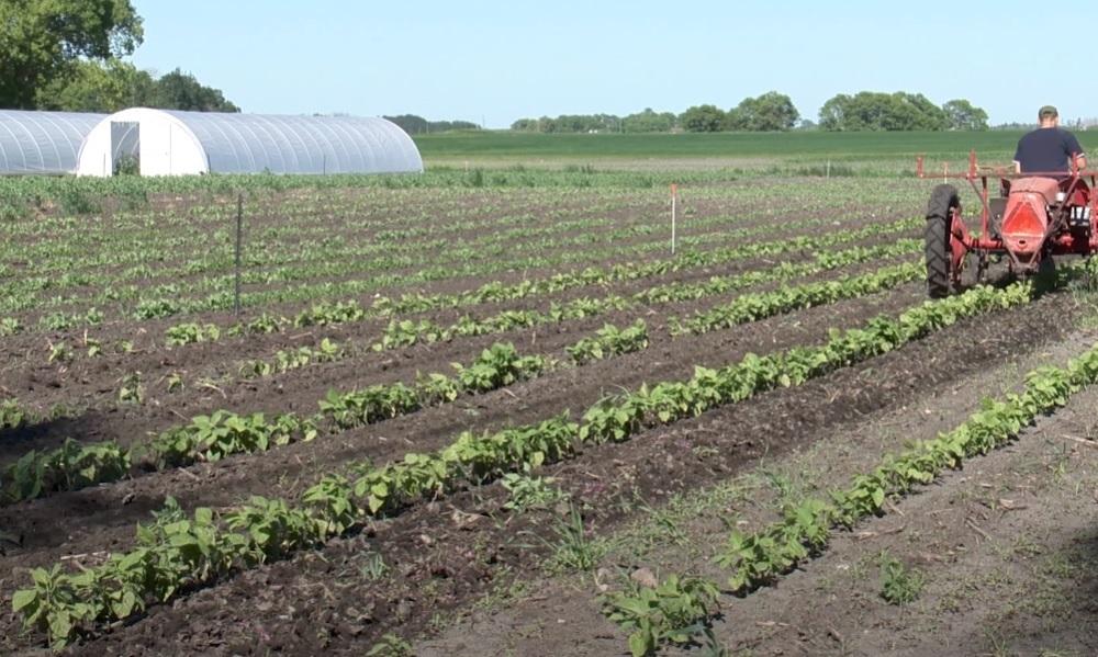 Feld und Ackerpflege mit modernen Trecker