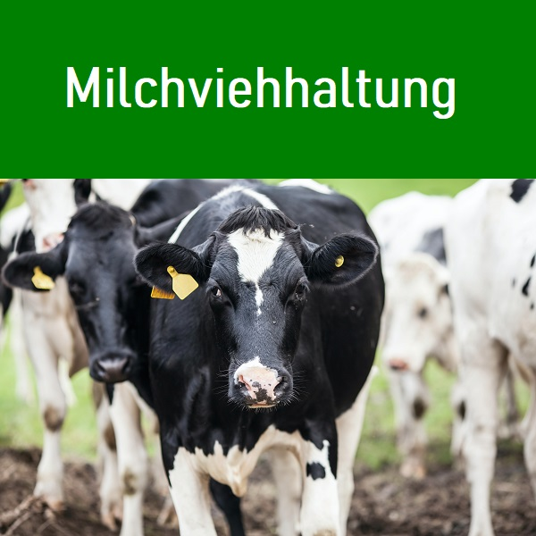 Wir vermitteln an Milchviehbetriebe Melker und Stallhilfen an Milchbauern unsere Agentur hat5 motivierte Mitarbeiter für tägliche Stallarbeiten