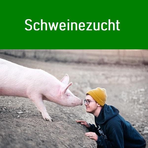 Agriservice Personal-Agentur für Schweinehaltung Mitarbeiter für Mastfarmen- und Schweine Zuchtbetriebe vom Helfer bis zur Fachfrau