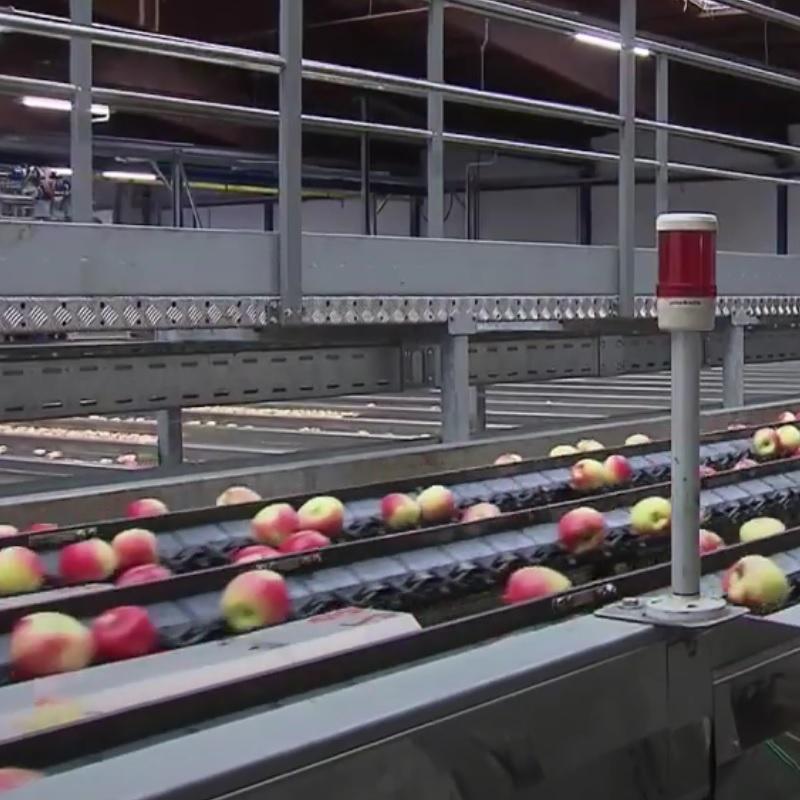 Techniker und Technikerinnen für Obstbau und Obstverwertung führen Untersuchungs- und Beratungstätigkeiten durch. Sie überprüfen neu gewonnene Erkenntnisse auf Anwendungsmöglichkeiten in der Praxis. Im Bereich Obstbau sind sie hauptsächlich mit Problemstellungen Obstschädlingsbekämpfung befasst