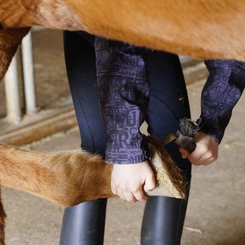 Fachagrarwirte/Fachagrarwirtinnen - Hufpflege sind in Pferdegestüten, Hufschmieden, landwirtschaftlichen Betrieben mit Pferdezucht, Tierkliniken oder auch in zoologischen Gärten, Tiergehegen und Tiergärten für die Pflege und Behandlung von Pferdehufen zuständig.