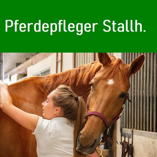 Stallhilfen und PferdepflegerInnen werden von Agri-Service nach Deutschland Österreich und in die Schweiz vermittelt