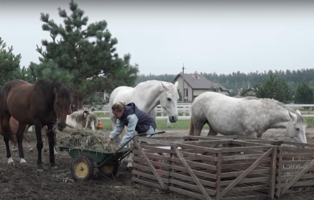 Pferde brauchen viel Pflege, gute Pferdepfleger viel Freiheit und gute Nahrung