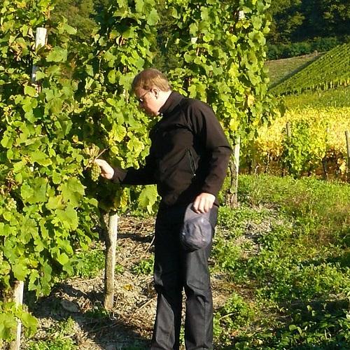 Winzer/innen bearbeiten den Boden von Weinbergen und Rebgärten. Bestimmt vom jahreszeitlichen Ablauf setzen sie Jungpflanzen, schneiden und binden die Weinstöcke, düngen und bekämpfen Unkraut und Schädlinge