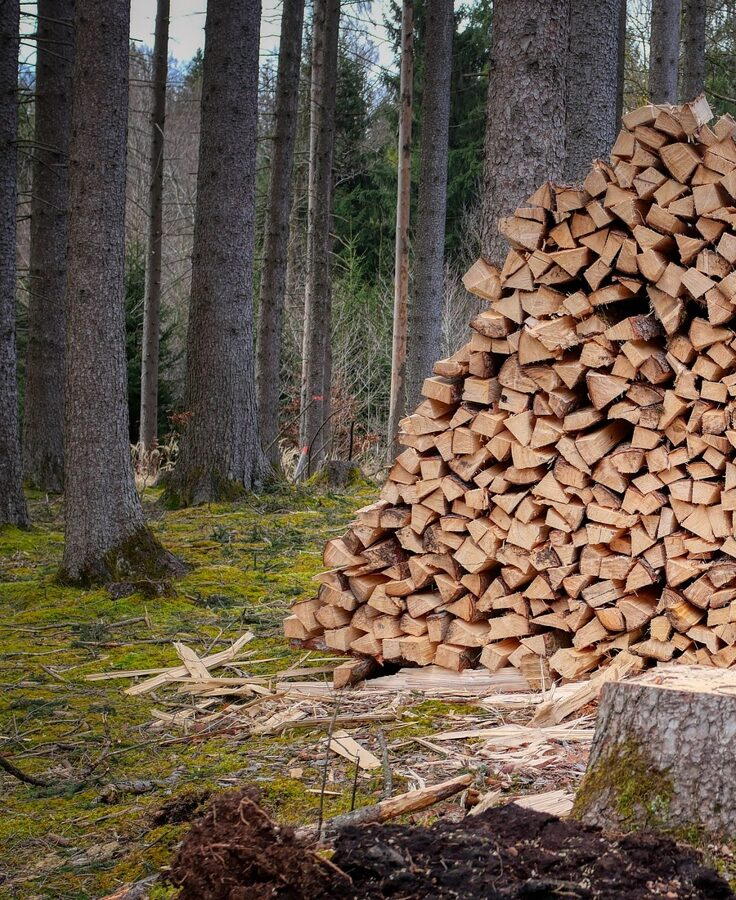 Gespaltenes Holz im Fichtenwald