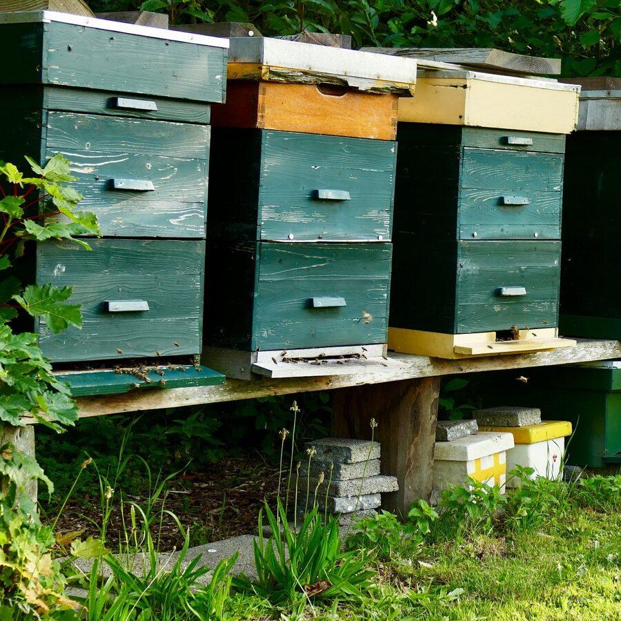 Tierwirtschaftsmeister/innen übernehmen in der Bienenhaltung verantwortliche Fach- und Führungsaufgaben in allen Bereichen der Zucht und Haltung von Bienen sowie in der Produktion und im Verkauf von Honig und Bienenwachs. Sie sorgen für die Herstellung hochwertiger und marktgerechter Produkte und setzen neue wissenschaftliche Erkenntnisse auf diesem Gebiet um. Außerdem obliegt ihnen die erfolgreiche wirtschaftliche Führung des Betriebes oder des Unternehmens. Insgesamt zielt ihre Tätigkeit darauf ab, durch sparsamen Mitteleinsatz, gute Arbeitsplanung, moderne Kulturführung sowie Ausnutzung geeigneter Marktchancen den Betriebsgewinn zu optimieren. Häufig führen sie alle berufsüblichen Tätigkeiten auch selbst aus. Meist jedoch übernehmen sie in größeren Betrieben verantwortliche Fach- und Führungsaufgaben.
