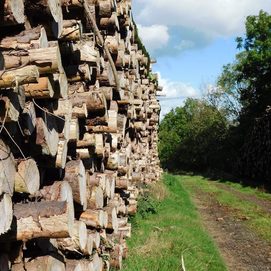 Forstwirte und -wirtinnen begründen Waldbestände, das heißt, sie gewinnen Saatgut, bearbeiten den Boden und ziehen in Baumschulen Bäumchen hoch
