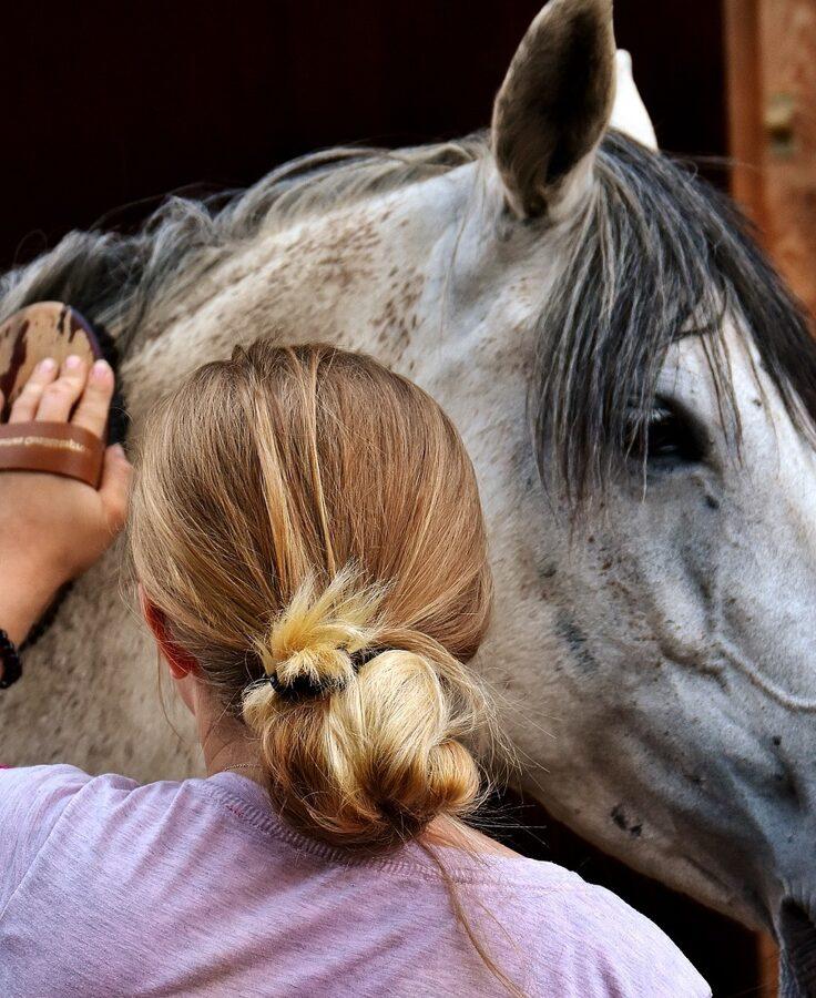 Pferdepflegerin striegelt grauen Hengst