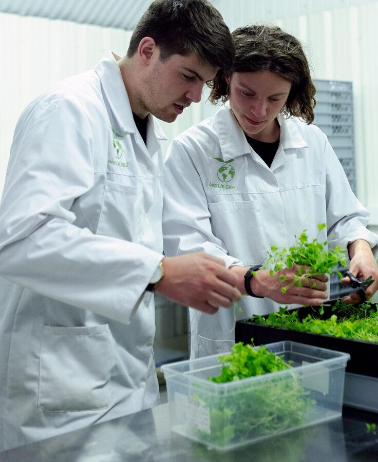 Agrartechnische Assistenten untersuchen grünen Salat im Labor